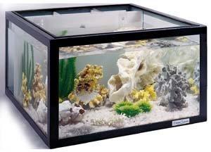 Stationary-Stand-for-the-25-Gallon-Oceanic-Aquarium-0