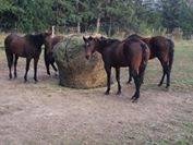 Round-Bale-Slow-Feed-Hay-Net-6×6-2-12-Inch-Hole-0