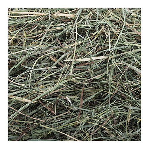 Small-Pet-Select-Orchard-Grass-Hay-Pet-Food-0-0