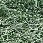 Standlee-Premium-Western-Forage-Timothy-Grass-25lb-Box-0-0
