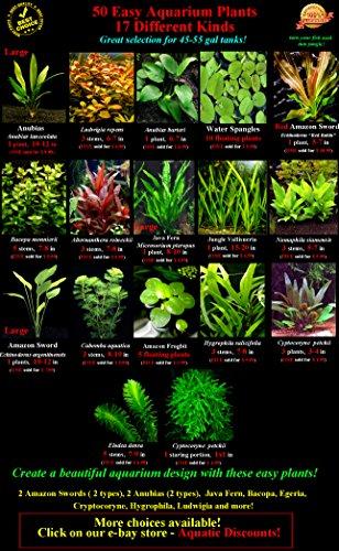 50-Live-Aquarium-Plants-17-Different-Kinds-Amazon-Swords-Anubias-Java-Fern-Java-Moss-Ludwigia-and-more-Great-plant-sampler-for-40-45-gal-tanks-0-0