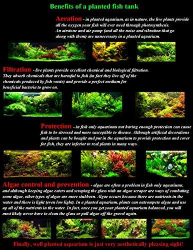 50-Live-Aquarium-Plants-17-Different-Kinds-Amazon-Swords-Anubias-Java-Fern-Java-Moss-Ludwigia-and-more-Great-plant-sampler-for-40-45-gal-tanks-0-1