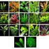 50-Live-Aquarium-Plants-17-Different-Kinds-Amazon-Swords-Anubias-Java-Fern-Java-Moss-Ludwigia-and-more-Great-plant-sampler-for-40-45-gal-tanks-0