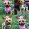 50pcspack-Cute-New-Dog-Hair-Bows-Pairs-Rhinestone-Pearls-Flowers-Topknot-Mix-Styles-Dog-Bows-Pet-Grooming-Products-Mix-Colors-Pet-Hair-Bows-Topknot-Rubber-Bands-0-1