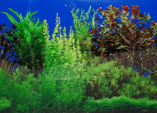 9088-20-x-48-Fish-Tank-Background-2-Sided-River-Bed-Lake-Background-Aquarium-by-New-0-1