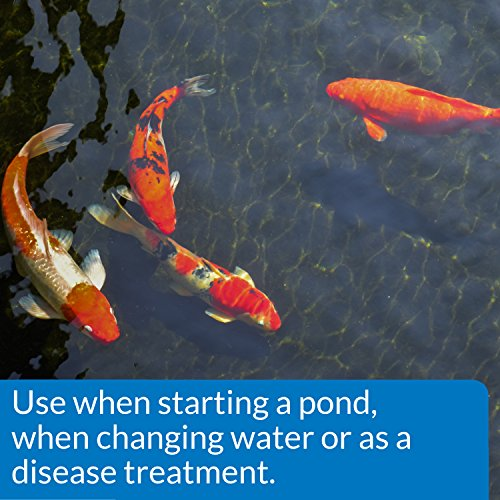 API-Pond-Salt-Pond-Water-Salt-0-1