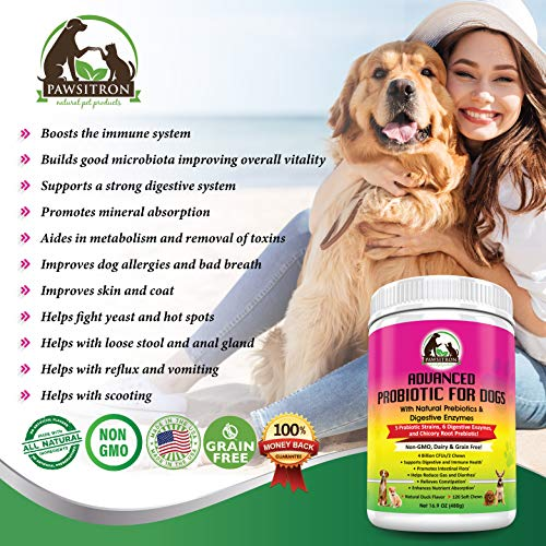 Advanced-Probiotics-for-Dogs-with-Prebiotics-Digestive-Enzymes-for-Overall-Wellness-Digestion-Bad-Breath-Diarrhea-Relief-Constipation-Healthy-Dog-Treats-Non-GMO-Grain-Free-120-Soft-Chews-0-0
