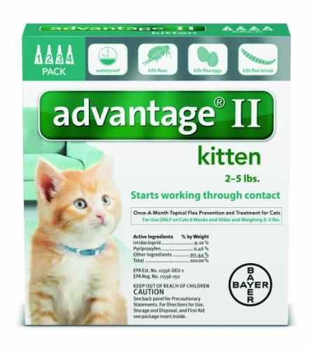 Advantage-2-Kitten-0