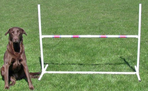 Affordable-Agility-Practice-Adjustable-Jump-0-0