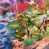 Aquarium-Plants-DecorationArtificial-Plants-for-Fish-Tank10-Inches25cm-High2-Pack-0-1