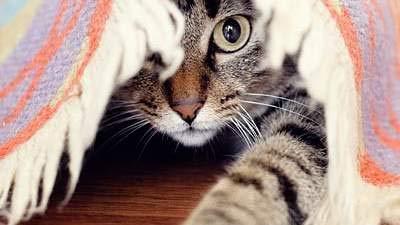 BEST-PET-SUPPLIES-LLC-cat-Immune-Booster-Treats-Cats-Total-Health-Complex-Premium-Formula-Coat-Joint-Oral-Eye-Immune-Health-Cats-Immune-Support-120-Tables-2-Bottles-0-2