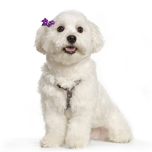 Beirui-20pcs-Cute-Dog-Hair-Bows-with-Rubber-Bands-Adorable-Crystal-Rhinestone-Studded-Sparkly-Nylon-Pet-Grooming-Accessoriess-for-Long-Hair-Dog-Kitten-0-2