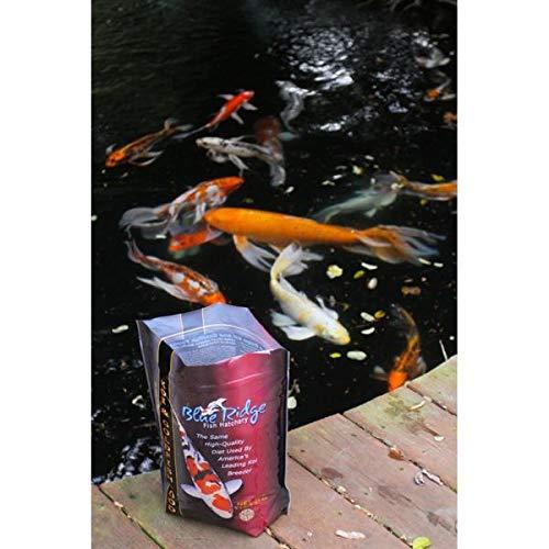 Blue-Ridge-Fish-Food-Pellets-Koi-and-Goldfish-Color-Rich-Formula-Floating-Large-Pellet-Balanced-Diet-0-0
