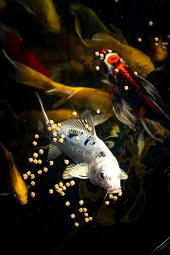 Blue-Ridge-Fish-Food-Pellets-Koi-and-Goldfish-Cool-Water-Wheat-Formula-Floating-Large-Pellet-Balanced-Diet-0-2