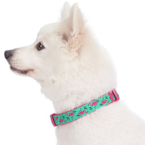 Blueberry-Pet-7-Patterns-Statement-Collection-Dog-Collars-with-Awesome-Small-Animal-Prints-0-1