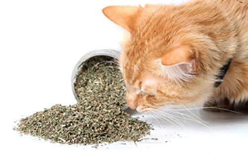 Cat-Crack-Organic-Catnip-Premium-Blend-Safe-for-Cats-Infused-with-Maximum-Potency-Your-Kitty-is-Guaranteed-to-Go-Crazy-for-0-0
