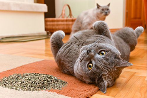 Cat-Speed-Catnip-Premium-Maximized-Blend-Safe-for-Cats-Infused-with-Insane-Potency-Your-Kitty-is-Guaranteed-to-Go-Nuts-for-0-0