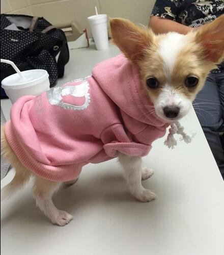 EXPAWLORER-Princess-Dog-Cat-Fleece-Sweatshirt-Hoodies-0-2