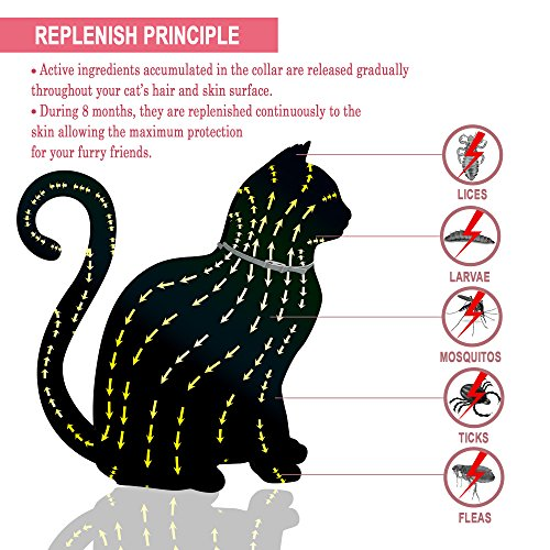 GORAUL-Flea-and-Tick-Collar-for-Cats-8-Months-Protection-Hypoallergenic-Adjustable-Waterproof-Cat-Collar-Flea-Treatment-Tick-Prevention-with-Natural-Essential-Oil-0-0