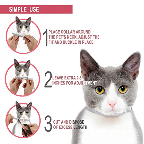 GORAUL-Flea-and-Tick-Collar-for-Cats-8-Months-Protection-Hypoallergenic-Adjustable-Waterproof-Cat-Collar-Flea-Treatment-Tick-Prevention-with-Natural-Essential-Oil-0-1