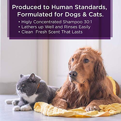 Lillian-Ruff-Professional-Dog-Shampoo–Concentrated-Dog-Shampoo-with-Aloe–Tear-Free-Lavender-Coconut-Scent–Soothe-Cleanse-Normal-to-Dry-Itchy-Sensitive-Skin–Made-in-USA-0-1