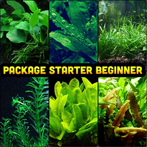 Mainam-30-Stems-Package-Starter-Beginner-Set-Live-Aquarium-Plants-Micro-Sword-Rosette-Amazon-Sword-Anubias-Java-Fern-and-More-0