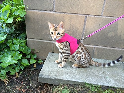 Mynwood-Cat-JacketHarness-Pink-Adult-0-2