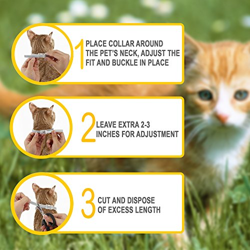 ONMOG-Flea-and-Tick-Prevention-Collar-for-Cat–Best-Flea-Collar-Repellent–8-Month-Protection–Environment-Friendly-with-Fully-Natural-Ingredients-0-2