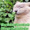 Pet-MasterMind-I-Love-Catnip-4oz-Liquid-Catnip-Spray-All-Natural-Extra-Potent-Formula-Made-from-100-Canadian-Grown-Catnip-0-0