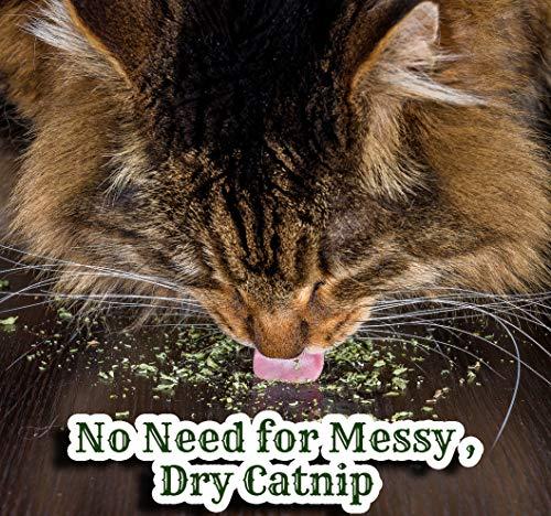 Pet-MasterMind-I-Love-Catnip-4oz-Liquid-Catnip-Spray-All-Natural-Extra-Potent-Formula-Made-from-100-Canadian-Grown-Catnip-0-1