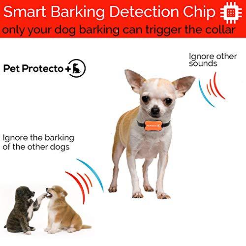 Pet-Protecto-Bark-Collar-New-Version-Humanely-Stops-Barking-with-Sound-and-Vibration-NO-Shock-Harmless-and-Humane-Small-Dog-Bark-Collar-Medium-Dog-Bark-Collar-0-1