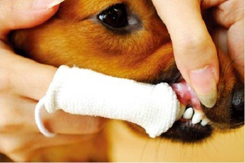 Petosan-Microfiber-Fingerbrush-Oral-Cleaner-for-Pets-0-1