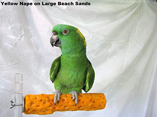 Pollys-Beach-Sands-Bird-Perch-Large-0-0