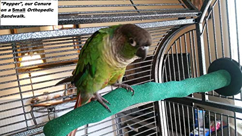 Pollys-Sand-Walk-Orthopedic-Bird-Perch-Medium-0-0