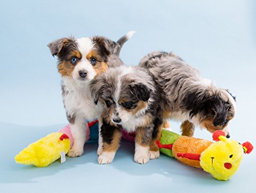ZippyPaws-Colorful-Caterpillar-Squeaky-Stuffed-Plush-Dog-Toy-0-2