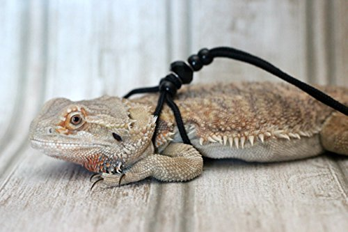 Adjustable-Reptile-Leash-Harness-Great-for-Reptiles-or-Small-Pets-100-Adjustable-One-Size-Fits-Most-0-2