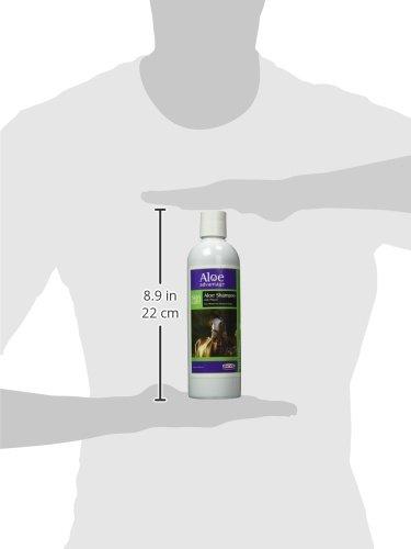 Aloe-Advantage-Shampoo-with-Phenol-16-Ounce-0-0
