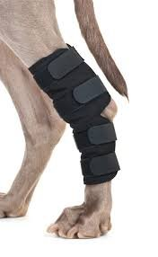 Back-On-Track-Hock-Brace-Ideal-For-Dogs-With-Weak-tarsus-Following-An-Operation-Or-Due-To-Arthritis-Or-Other-Injuries-Available-In-Small-Medium-Or-Large-0