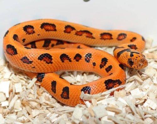Bayou-Boy-All-Natural-Reptile-Bedding-Bag-0-0