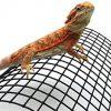 Carolina-Custom-Cages-Bearded-Dragon-Tanning-Arch-Reptile-Habitat-Accessory-0-2