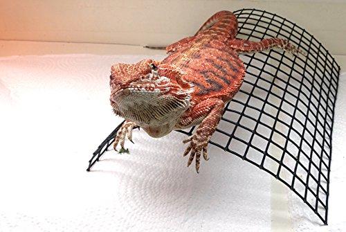 Carolina-Custom-Cages-Bearded-Dragon-Tanning-Arch-Reptile-Habitat-Accessory-0