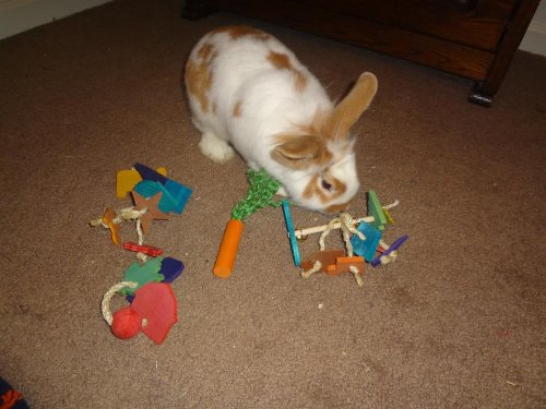 Crazy-Jingle-Tossing-Rabbit-Toy-0-2
