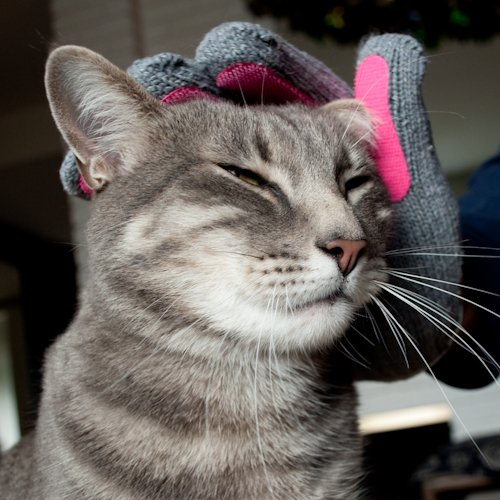 Kitty-Tongue-Cat-Pampering-Massage-Glove-with-Gentle-Grooming-0-0