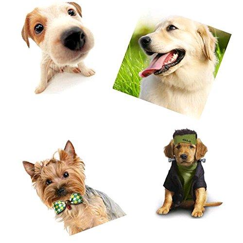 Lebbeen-10pcspackCool-Gentle-Stylish-Adjustable-Pet-Teddy-Cat-Dog-Rabbit-Bow-Ties-Necktie-0-0