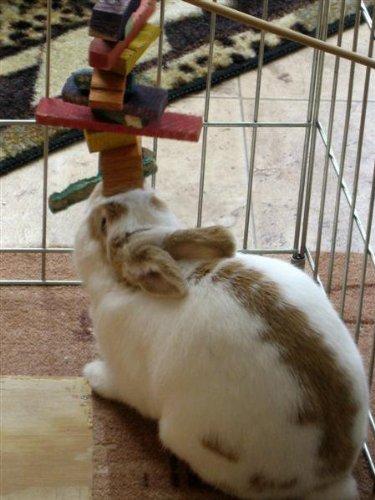 Medium-Crazy-Color-Rabbit-Chew-Toy-0-1