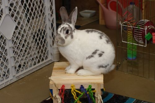 Mini-Activity-Zone-Rabbit-Toy-0-0