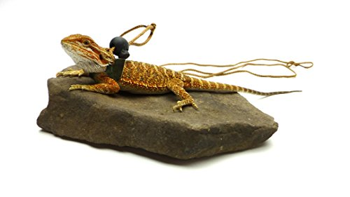 Ogle-Lizard-Leash-Limited-Edition-Green-Scales-0-1