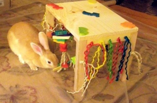 Original-Activity-Zone-Rabbit-Toy-0-1