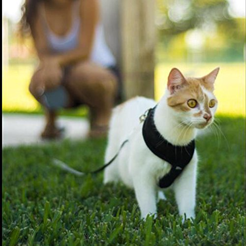 Pet-Club-No-Pull-DogCat-Harness-and-Leash-Set-for-Walking-Padded-Dog-Vest-Harnesses-for-Puppy-Small-DogsCats-Cat-Dog-Training-Collar-PinkXSS-0-1