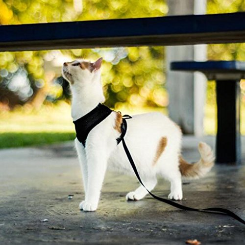 Pet-Club-No-Pull-DogCat-Harness-and-Leash-Set-for-Walking-Padded-Dog-Vest-Harnesses-for-Puppy-Small-DogsCats-Cat-Dog-Training-Collar-PinkXSS-0-2